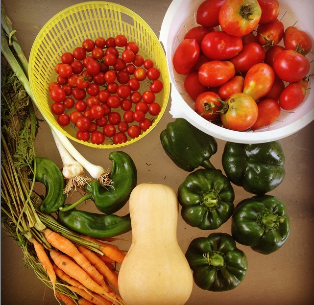veggies harvested from the garden - tomatoes, peppers, etc