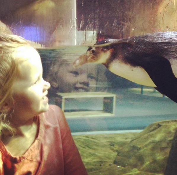 little girl watching a penguin