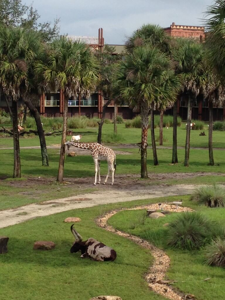 Disney S Animal Kingdom Lodge Resort Review The Frugal South