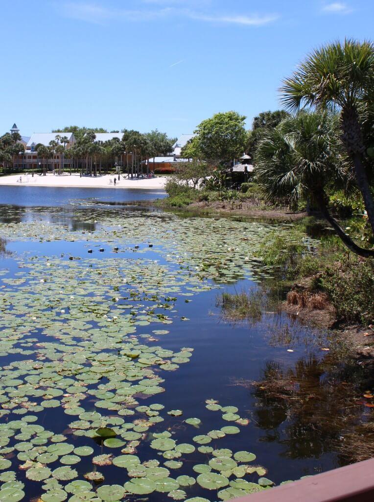 Water area at Disney's Caribbean Beach Resort