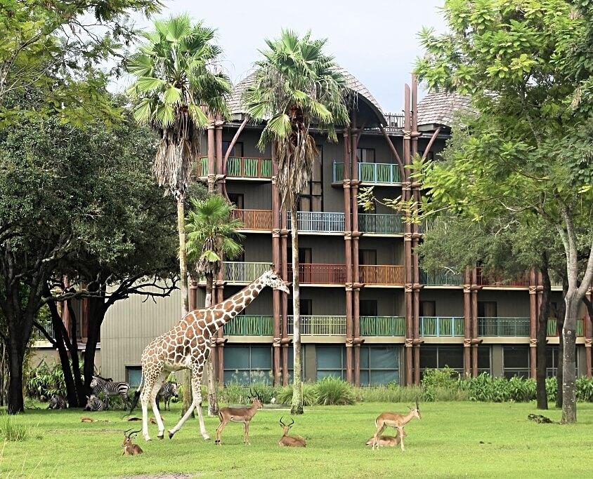 Safari animals at disney's animal kingdom lodge