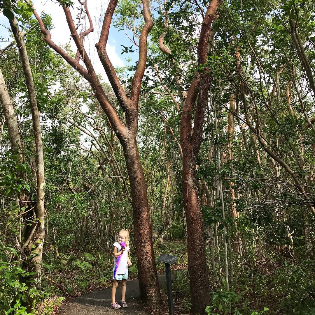 Little girl at Everglades National Park