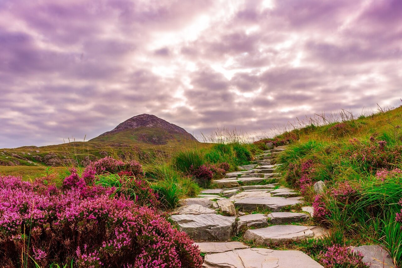 country path in Ireland with a purple sky and purple flowers