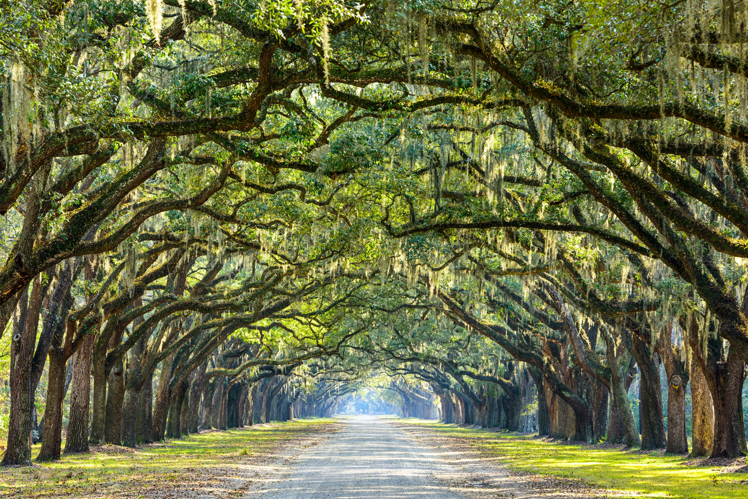 driveway into wormsloe plantation - things to do in savannah GA with kids
