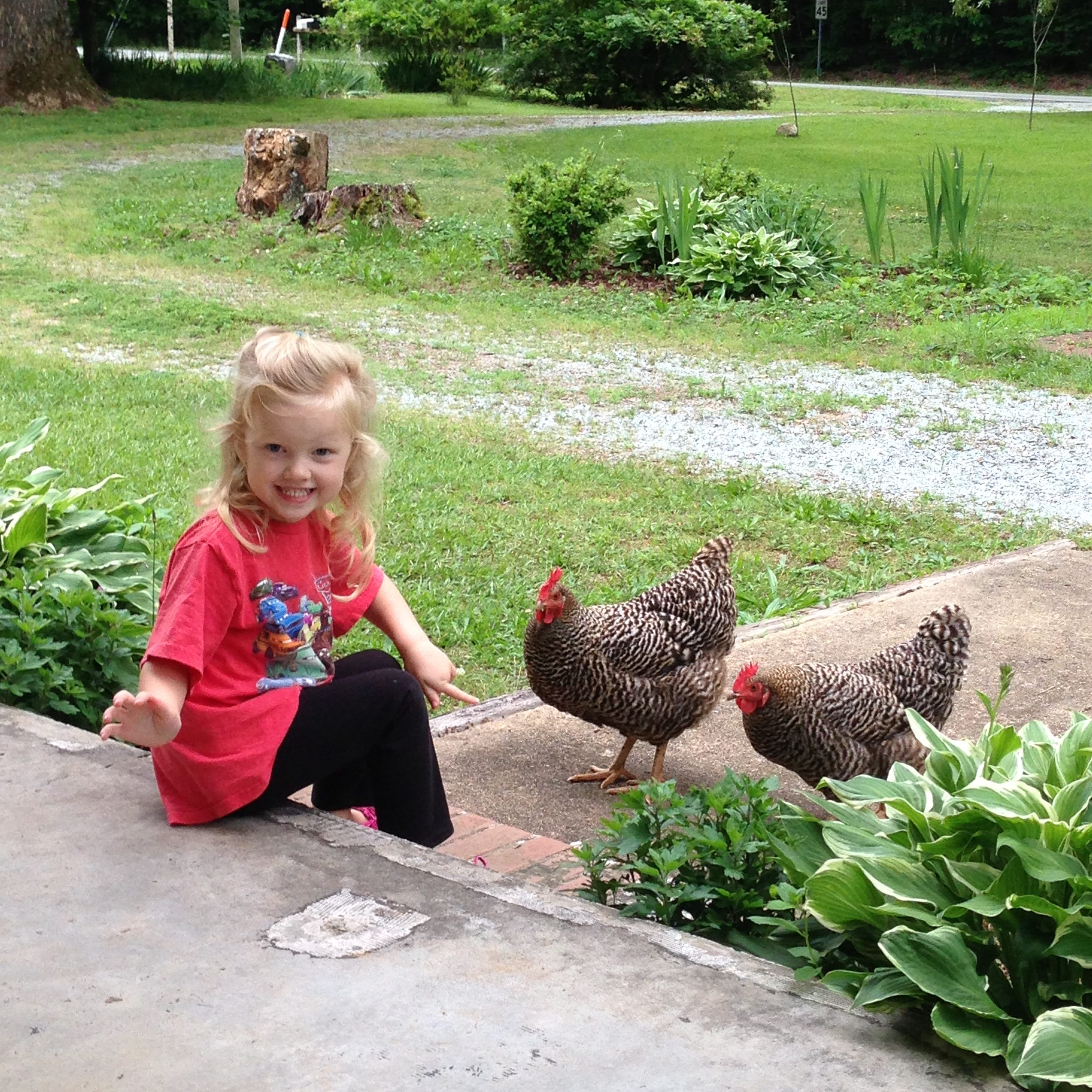 little girl sitting on porch with chickens on concrete walkway