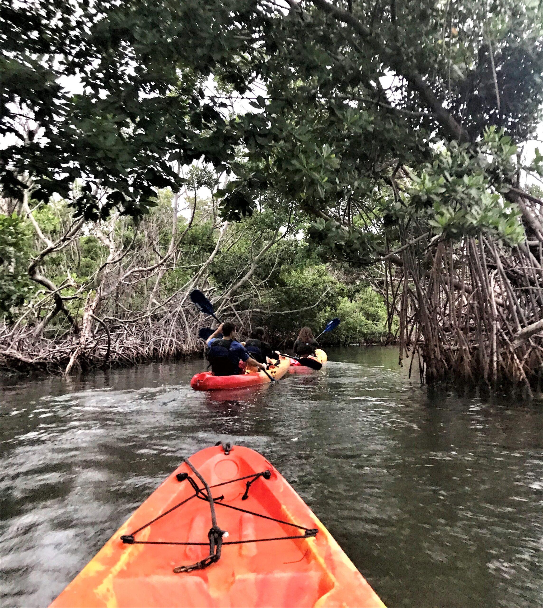 kayaking to bio bay puerto rico
